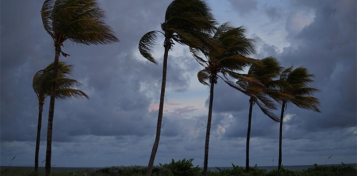 florida palm trees in a storm